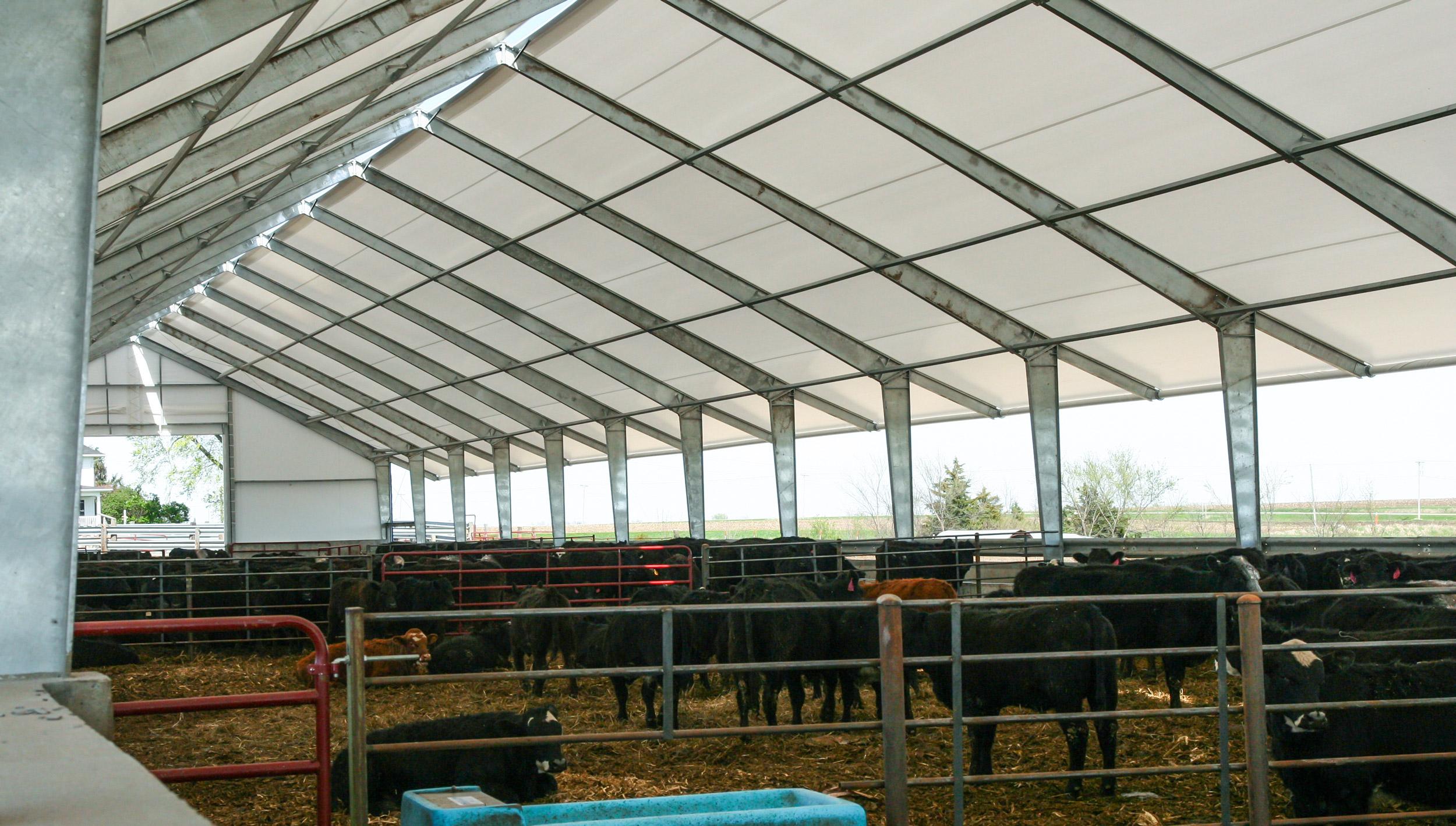 fabric cattle barn interior
